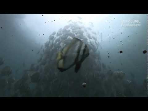 Tahiti Fish Aquaculture Stock Footage / Banque D'Images Aquaculture