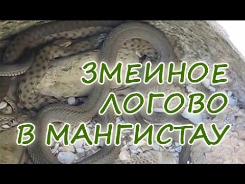 Змеинное логово на Каспийском побережье около Актау