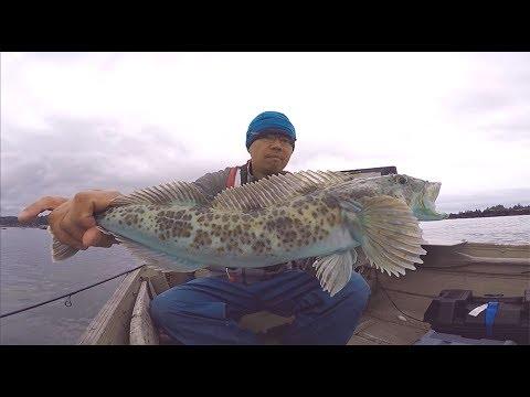 Bottom Fishing For Lingcod And Rock Fish (New Daiwa BG Reel)