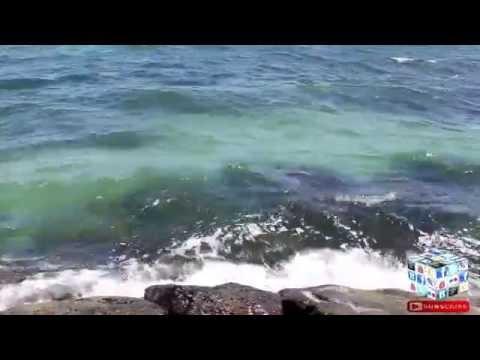 Visit Brighton Beach City in Melbourne Vic  Australia || 360 Video