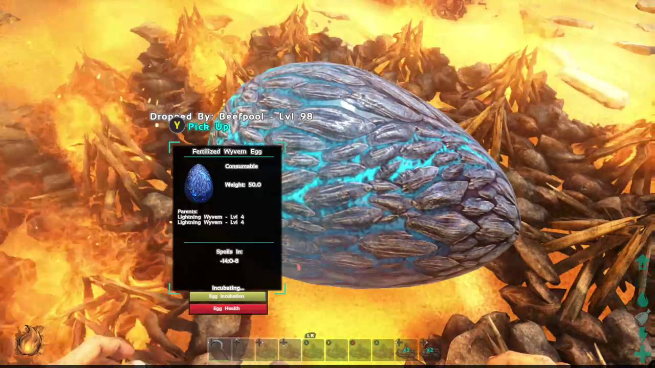 How to hatch a wyvern egg