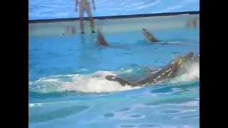 atraksi ikan lumba lumba di ancol