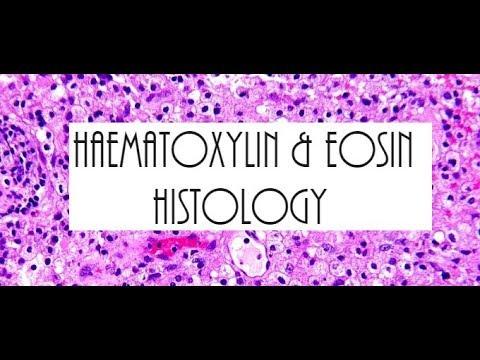 Haematoxylin And Eosin Staining H&E Histology