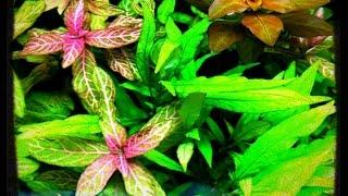Fishroom Update And Selling Aquatic Plants