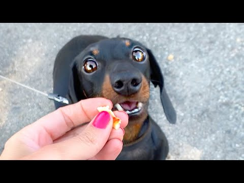 Loulou's Travel Diary| 1 The Journey