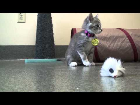 Pet of the Week: Lilly [2-month-old kitten]