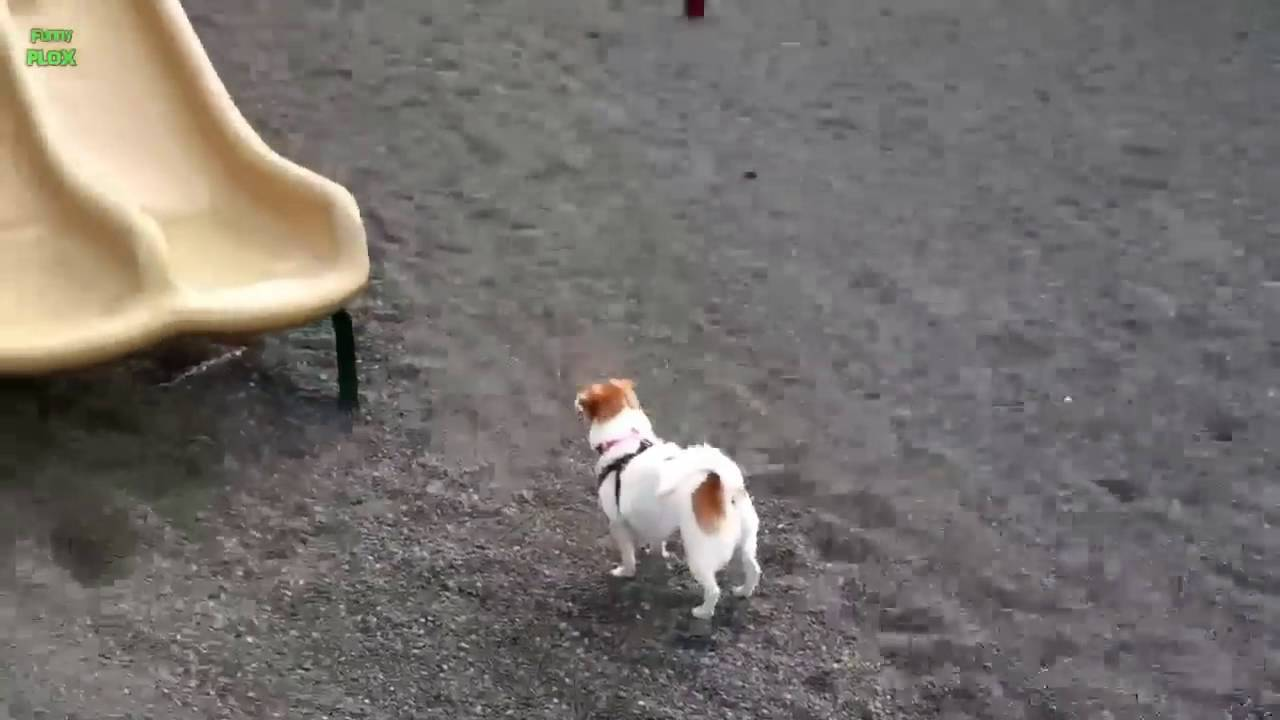 Puppies On Slides Compilation 2013 Youtube