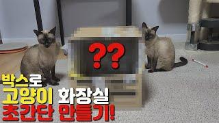 샴고양이 간이화장실 초간단 만들기! 똥손들도 가능!(F…