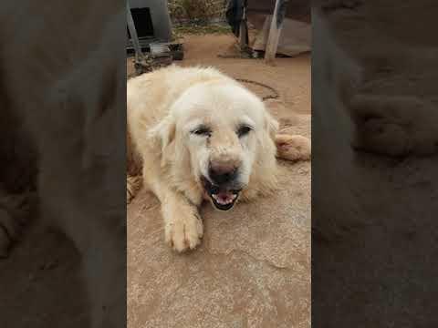 Bog dog without care