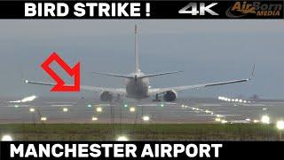 BIRD STRIKE - Sadly, Buzzard was Hit by Norwegian 737 - Manchester Airport 4K Plane Spotting