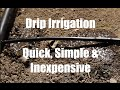 $10 Garden Series #9 -  How to Install a Drip Irrigation System for Your Garden