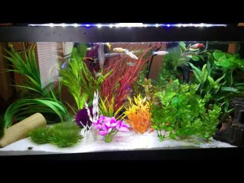 2 groups of fish you do not need in an aquarium