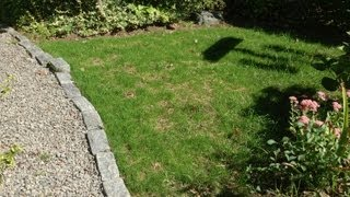How to Grow Grass - Successfully!