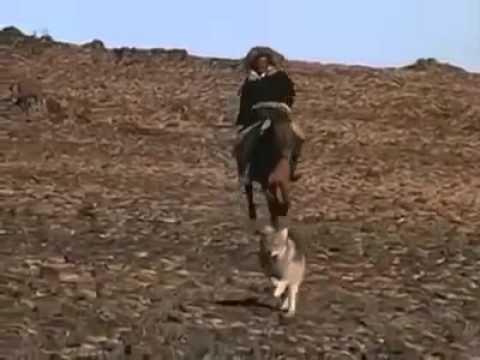 Kazak Avcıları Kurt Avı.
