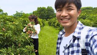 [4K] Đưa Em Gái Đi Ăn Vải Thiều Tại Vườn II San vlog