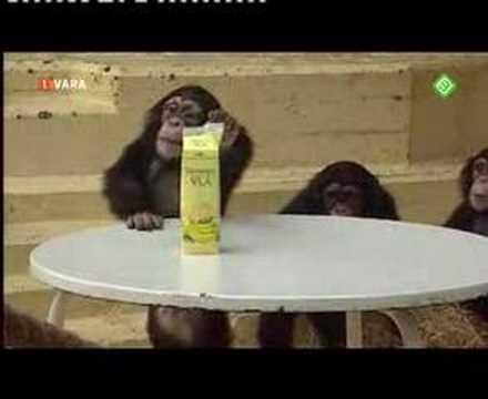 Ook dat nog - apen bananenvla test