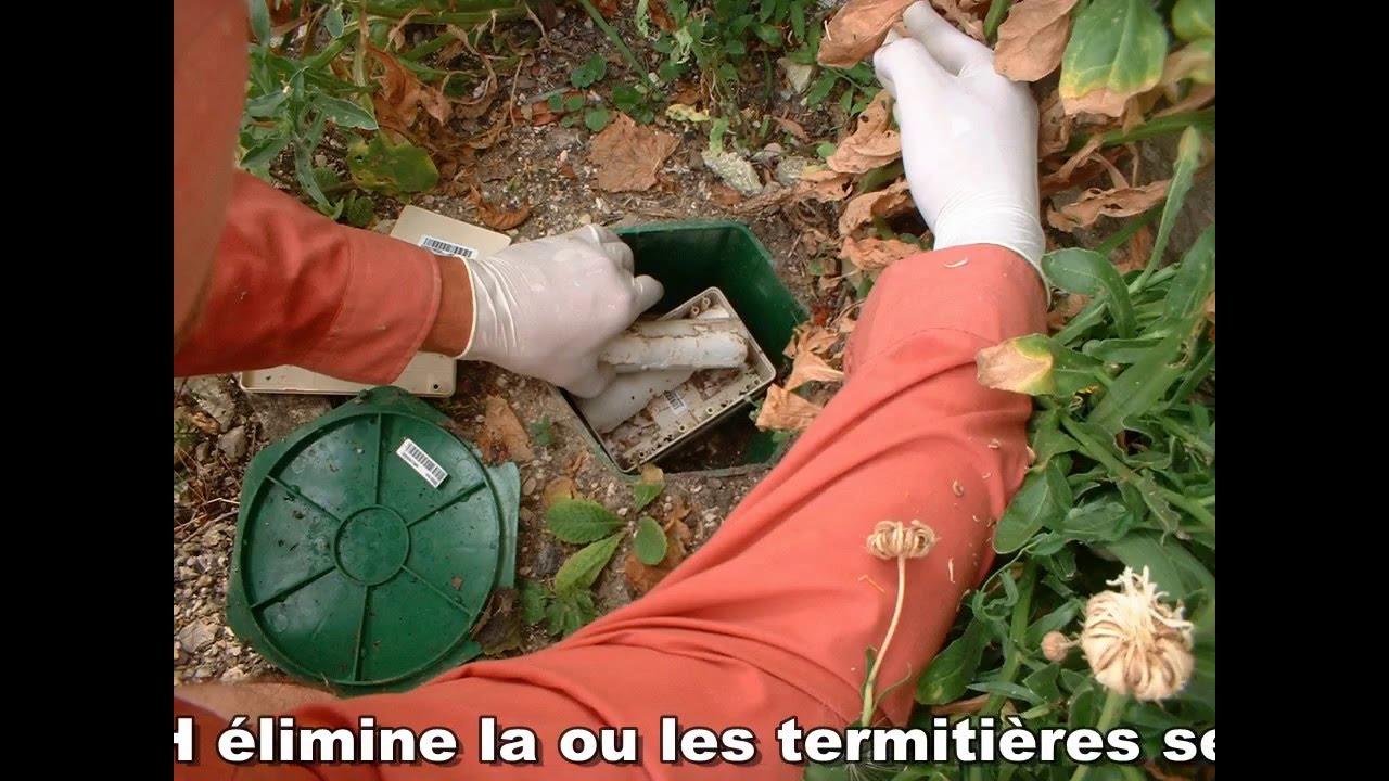 Pièges Appâts Anti-Termites