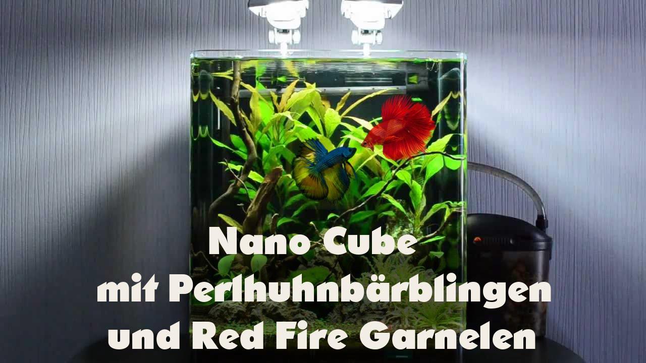 nano cube mit perlhuhnb rblingen und red fire garnelen doovi. Black Bedroom Furniture Sets. Home Design Ideas