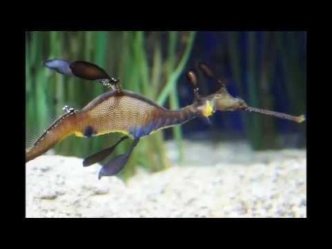 Monterey Bay Aquarium in USA - monterey bay aquarium ...