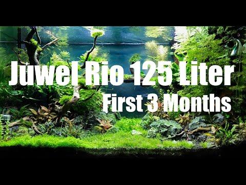 Juwel Rio 125 Liter Aquascape