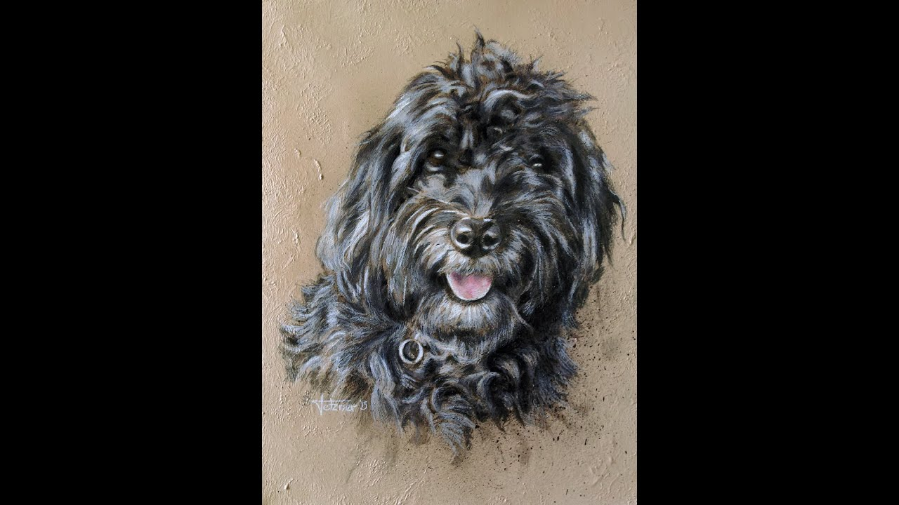 Marble Colored Pencil Drawings Of Clusters : Speed painting dog in acrylics and colored pencil youtube