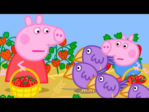 Peppa Pig Official Channel | Peppa Pig Picks Strawberries