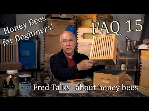 Beginner Beekeeping Frequently Asked Questions 15 How to Keep Honey bees