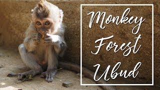 BALI 2015 | SACRED MONKEY FOREST UBUD (FULL HD)