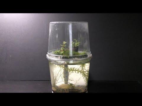 Preparing Land Moss To Grow Underwater Update