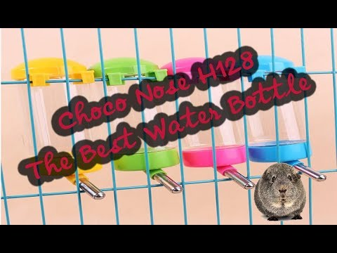 Choco Nose H128 The Best Guinea Pig Water Bottle For 1 Or 2 Guinea Pigs