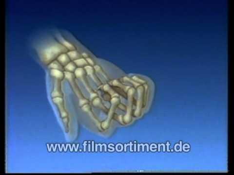 skelett hand