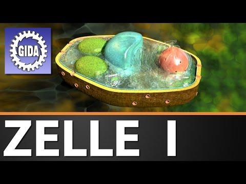 Gida Zelle I Biologie Schulfilm Dvd Trailer