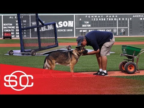 Service dog helps Red Sox's groundskeeper deal with PTSD | SportsCenter