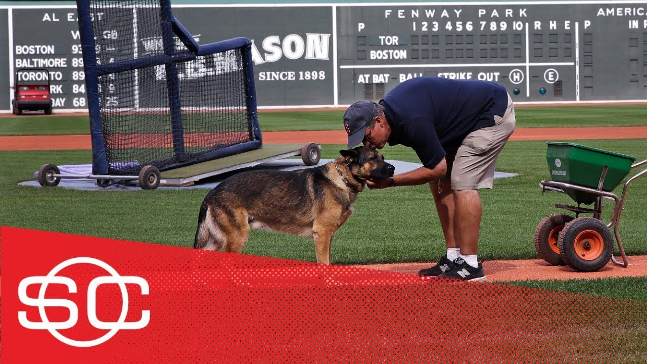 Service dog helps Red Sox's groundskeeper deal with PTSD   SportsCenter