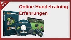 Online Hundetraining - Online Hundeschule Erfahrung - Online Hundetraining Johanna Esser