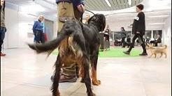 Hundekurs: Hverdagslydighet