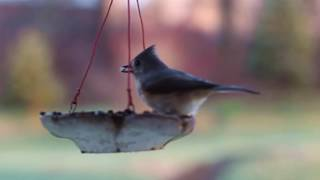 Скворечник для птиц от сайта givotniymir.ru