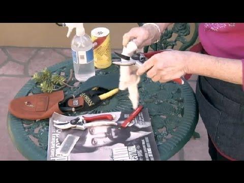 How to Sharpen Garden Pruners : Gardening Advice