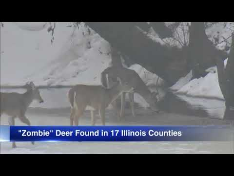 'Zombie deer' disease reported in 24 states