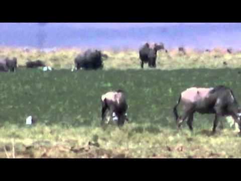 Amboseli National Park - Oct 2015 - Part 1 of 2
