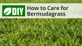 How to Care for Bermudagrass