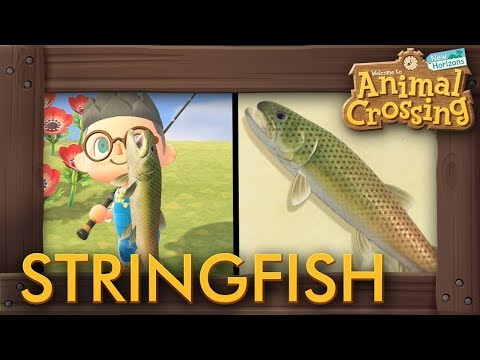 Animal Crossing: New Horizons - How To Catch Stringfish (15,000 Bells Fish)