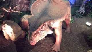 Protoceratops Dinsosaur (movement with sound)