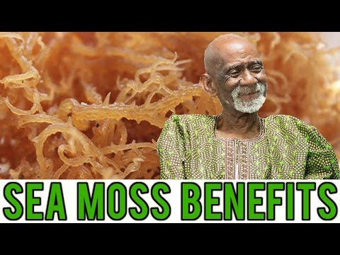 Dr Sebi Talks About Amazing Benefits Of Sea Moss