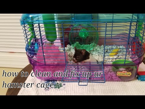 How to clean and fix your hamster cage.