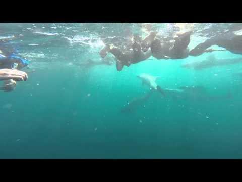 Australia Wild Dolphin Swim in Adelaide