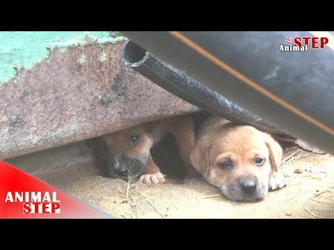 Poor Dog Family Lived In Abandoned House Got Feeding by Kindness Person