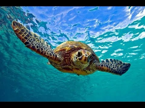Facts: The Green Sea Turtle