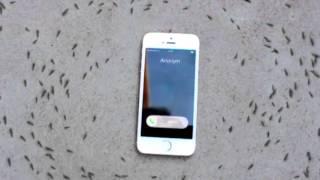 Lo que produce un telefono en las hormigas