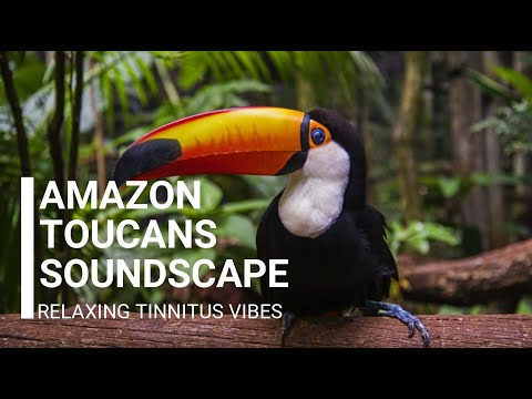 amazon-toucans-soundscape---relaxing-tinnitus-vibes